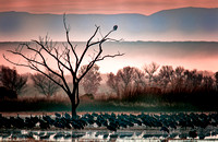 Bosque Del Apache, New Mexico sunset.